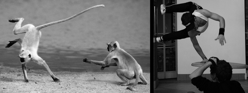 There are more parallels between monkeys and humans than those we recognize at first sight.