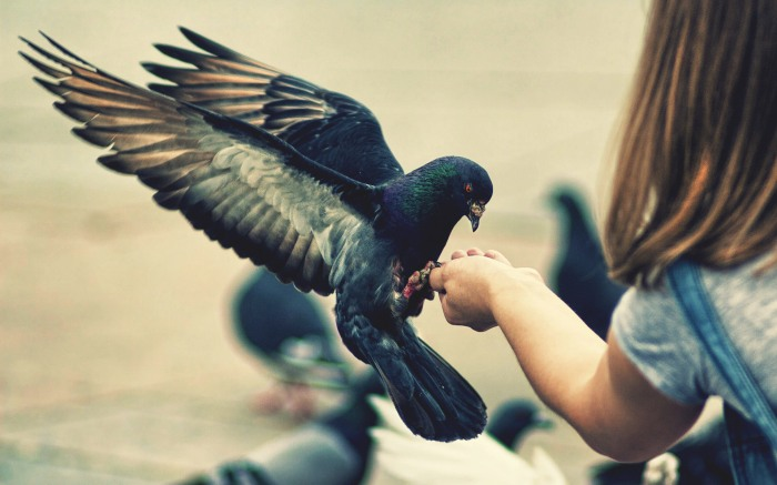pigeon hand
