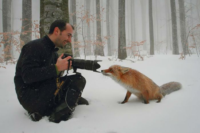 nature photography fox